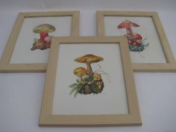 1960s vintage framed botanical prints, wild mushrooms - West Germany