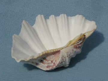 Sea scallop shell, handmade seashell soap dish, beach cottage soapdish