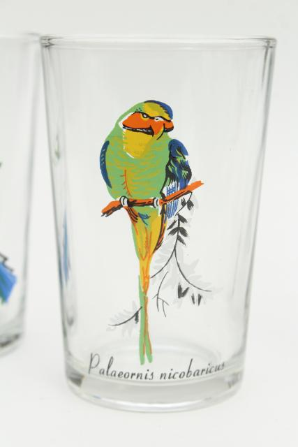 vintage KIG Malaysia drinking glasses, tumblers w/ exotic tropical birds